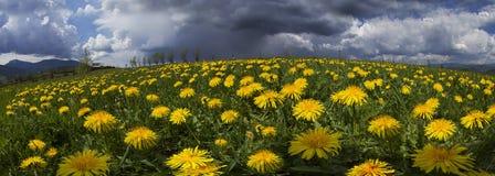 De Lente en de zomerbloemen van de open plek Stock Afbeeldingen