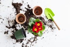 De lente en het planten van zaailingenvlakte lagen Hoogste mening royalty-vrije stock afbeelding