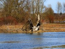 de lente en waterwater Royalty-vrije Stock Afbeelding