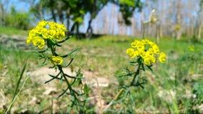 De lente en zijn beste met gele bloem stock fotografie