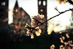 De lente en zonsondergang Stock Fotografie