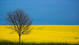 De lente, Engeland Stock Afbeeldingen