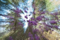 De lente Forest Abstract Swirl, selectieve nadruk Stock Foto's