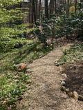 De lente Forest Awakening stock foto