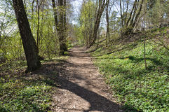 De lente Forest Path Horizontal Royalty-vrije Stock Afbeeldingen