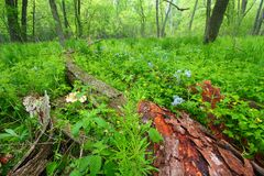 De lente Forest Scenery Illinois Stock Fotografie