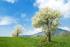 De lente in Frankrijk stock fotografie