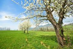 De lente in Frankrijk stock afbeelding
