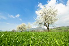De lente in Frankrijk royalty-vrije stock afbeelding
