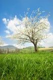De lente in Frankrijk royalty-vrije stock afbeeldingen