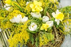 De lente geel boeket in een mand voor de Dag van de Internationale Vrouwen op eigh van Maart van mimosa witte tulpen en gele narc royalty-vrije stock foto's