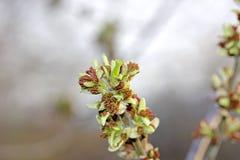 De lente is… gekomen Royalty-vrije Stock Fotografie