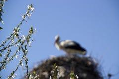 De lente is gekomen Royalty-vrije Stock Foto
