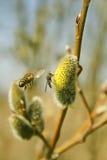 De lente is gekomen! Royalty-vrije Stock Fotografie