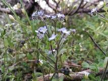 De lente in Georgië stock foto