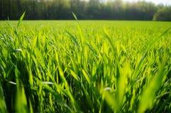 De lente, groen hooigebied stock foto