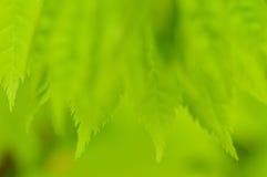 De lente groene achtergrond. Jonge bladeren. Royalty-vrije Stock Foto