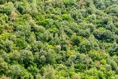 De lente groene bosachtergrond Royalty-vrije Stock Afbeeldingen