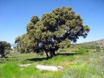 De lente in Gudar bergen Teruel Aragon Spanje Royalty-vrije Stock Foto's
