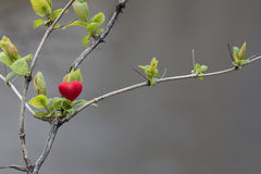 De lente in hart stock fotografie