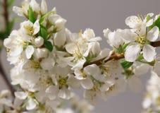 De lente het bloeien Royalty-vrije Stock Afbeeldingen