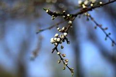 De lente het bloeien Royalty-vrije Stock Fotografie