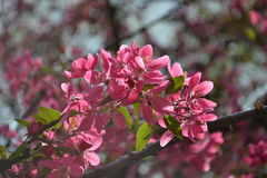 De lente het bloeien Royalty-vrije Stock Foto's