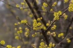 De lente het bloeien Stock Foto