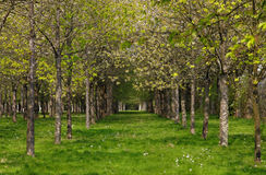 De lente in het bos royalty-vrije stock foto's