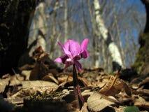 De lente in het bos Stock Afbeelding
