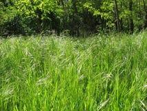 De lente in het bos Royalty-vrije Stock Fotografie