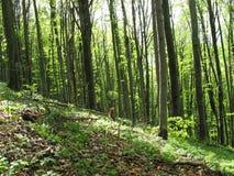 De lente in het bos Royalty-vrije Stock Afbeelding