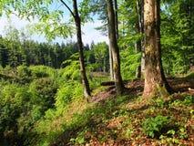 De lente in het bos Royalty-vrije Stock Afbeeldingen