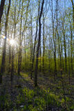 De lente in het bos Stock Foto