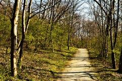 De lente in het bos Stock Afbeeldingen