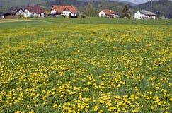 De lente in het dorp stock foto's