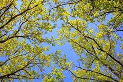 De lente in het hout Stock Afbeelding