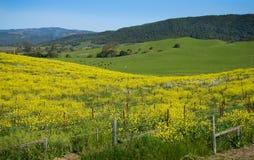 De lente in het Land Stock Foto