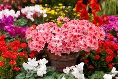 De lente het modelleren Royalty-vrije Stock Fotografie