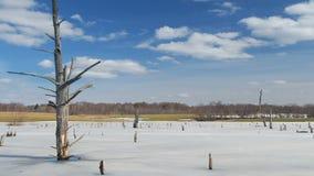 De lente in het moeras stock videobeelden
