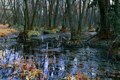 De lente in het moeras Stock Fotografie