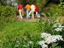 De lente in het park Stock Afbeelding