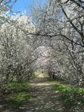 De lente in het park Stock Fotografie