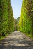 De lente in het Park Oliwski, Gdansk Royalty-vrije Stock Afbeeldingen