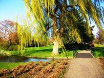 De lente in het park Wilhelminaplantsoen in Hoorn, Holland, Nederland stock afbeeldingen