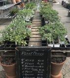 De lente het planten royalty-vrije stock afbeelding