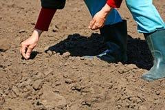 De lente het planten van zaden royalty-vrije stock afbeeldingen