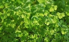 De lente het planten van zaden in April Royalty-vrije Stock Fotografie