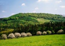 De lente in het platteland en de bossen royalty-vrije stock fotografie