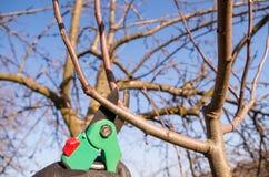 De lente het snoeien van fruitbomen in de tuin royalty-vrije stock foto's